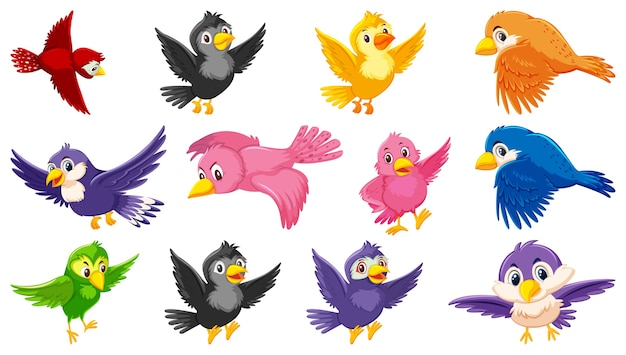 Set of bird cartoon character