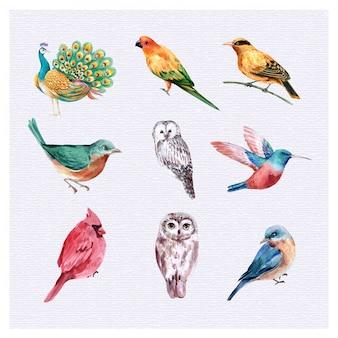 Set bird illustration