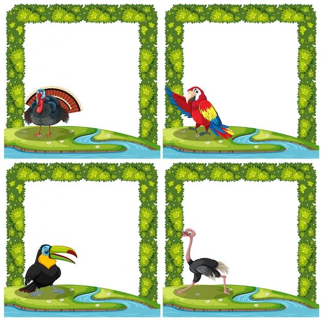 Set of bird on nature frame
