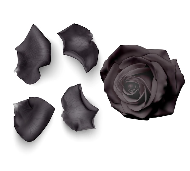 Set of black rose petals