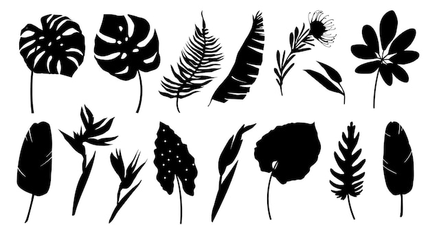 Set of black silhouettes of tropical leaves palms plants flowers banana plants monstera