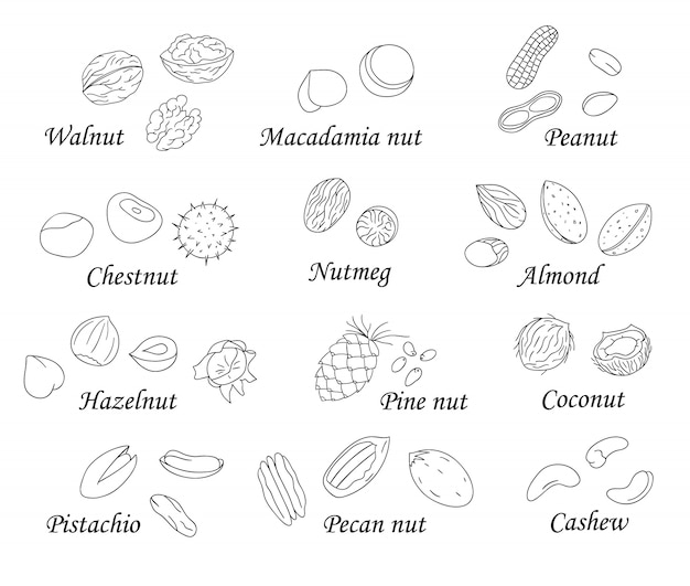 Set of black and white nuts. collection of isolated monochrome hazel nut, walnut, pistachio, almond, coconut. food illustration in cartoon or doodle style isolated on white.