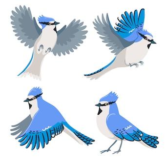 Set of blue jays isolated