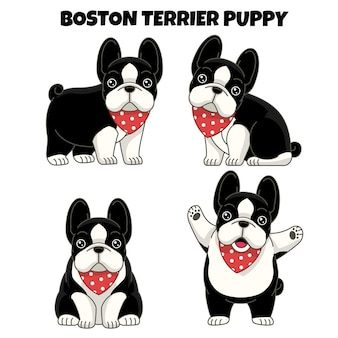 Set of boston terrier puppy dog