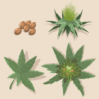 Set of botanical cannabis leaves
