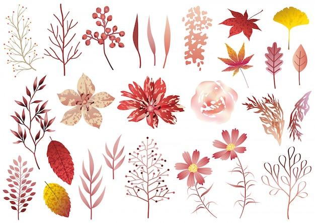 Set of botanical elements isolated  .   illustration.