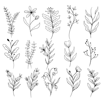 식물 잎 낙서 야생화 라인 아트 설정 프리미엄 벡터