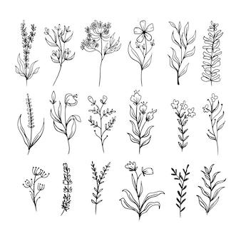 식물 잎 낙서 야생화 라인 아트 설정
