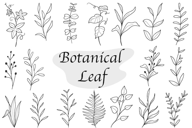 Set of botanical leaf doodle wildflower line art