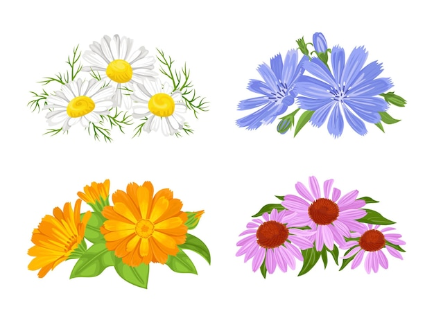 Set of bouquets of medicinal flowers.