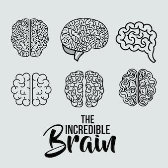 Set brains human isolated icon