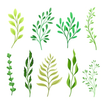 Set of branches with different leaves