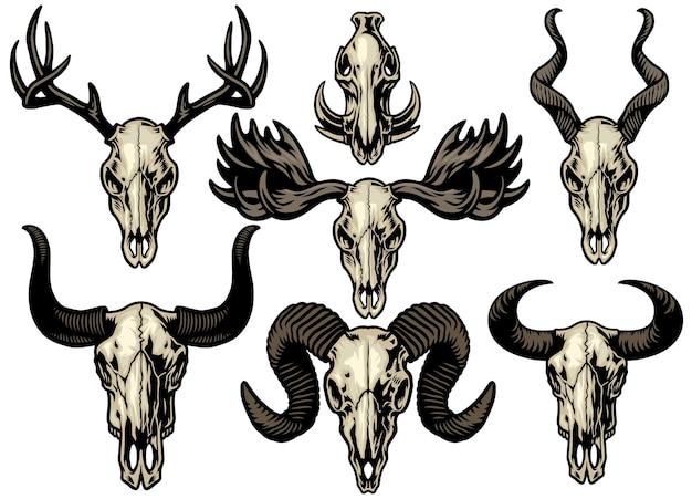 Набор наборов коллекции животных