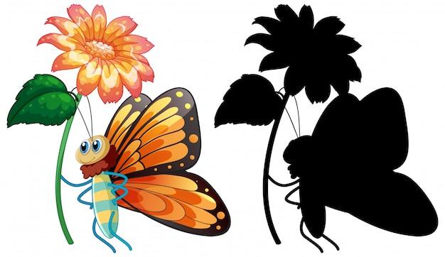 Set of butterfly cartoon