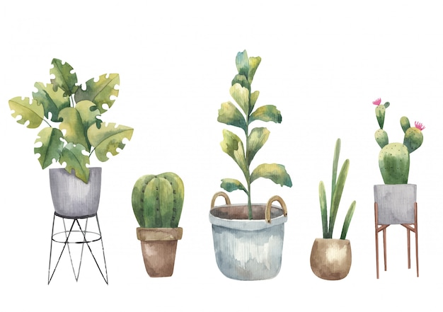Set of cacti, house plants and succulents watercolor illustration on a white background
