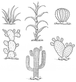 Set cacti and succulents.