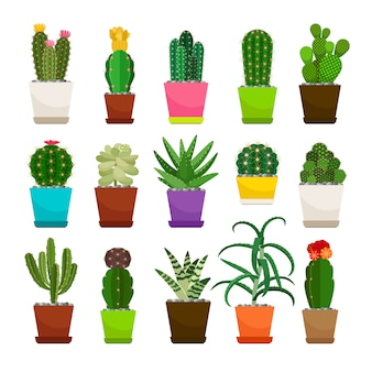 Set of cactus houseplants in flower pots