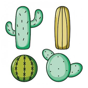 Set of cactus plants nature
