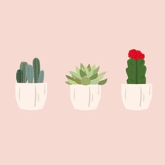 Set of cactus succulent plant. cute trendy vector illustration