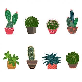 Set of cactus and succulent plants isolated on white background