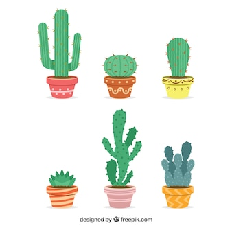 Set of cactus with nice decorative flowerpots