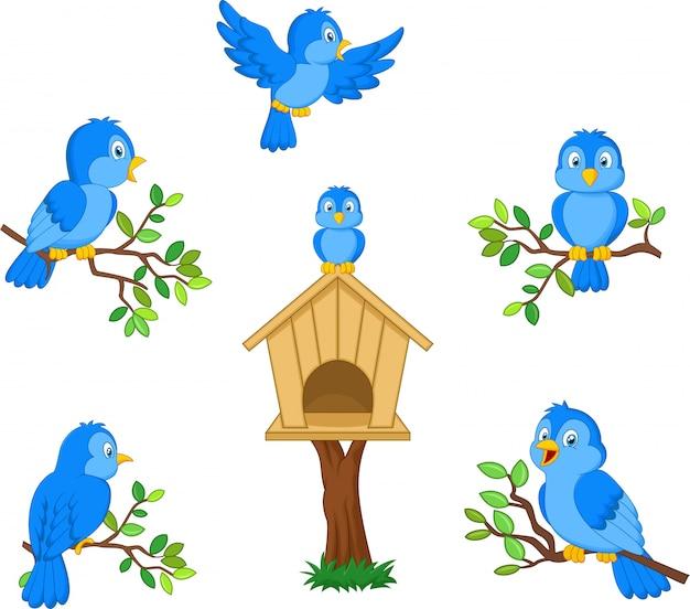 Set of cartoon blue bird