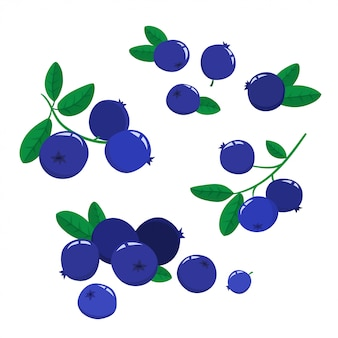 Set cartoon blueberries with green leaves isolated on a white background, bright berries branch.