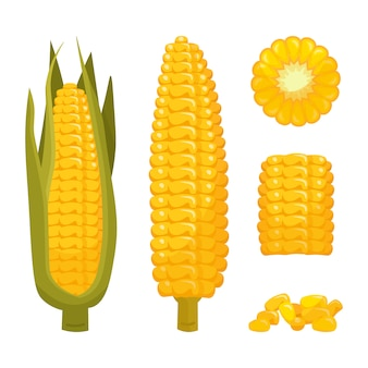 Set of cartoon corn in leaves and peeled