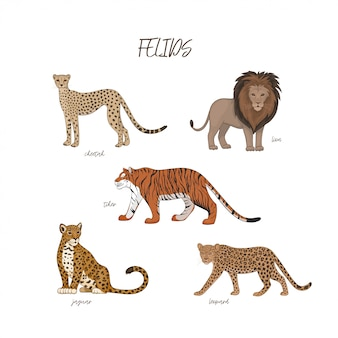Set of cartoon felids