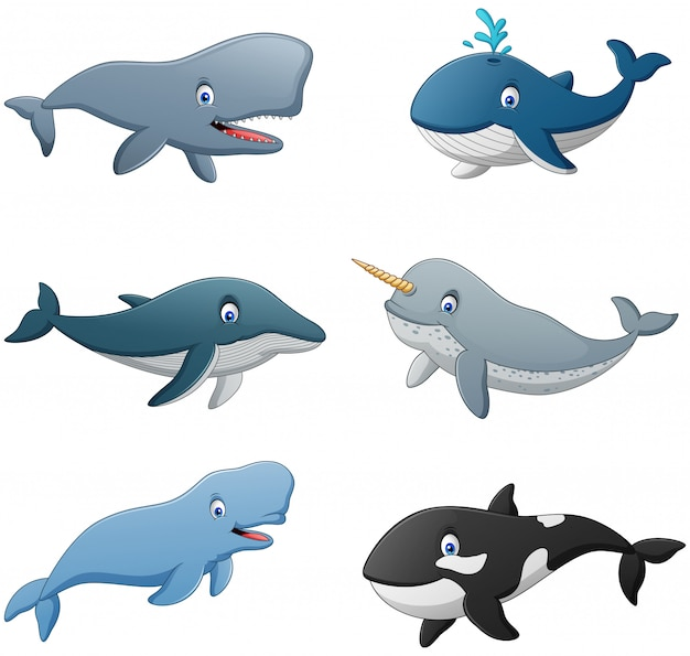 Set of cartoon whale.  illustration
