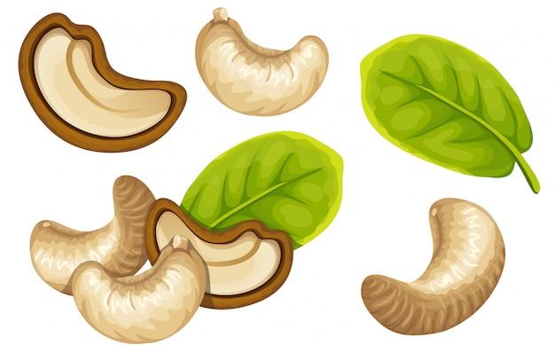 Set cashew and leaf.