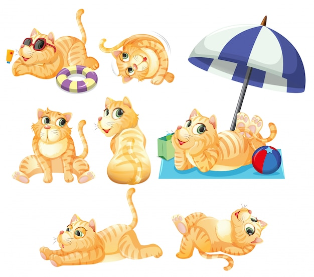 Set of cat character