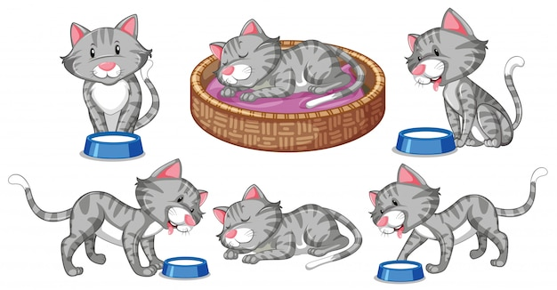 Set of cat character
