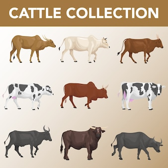 Set of cattle breeds collection