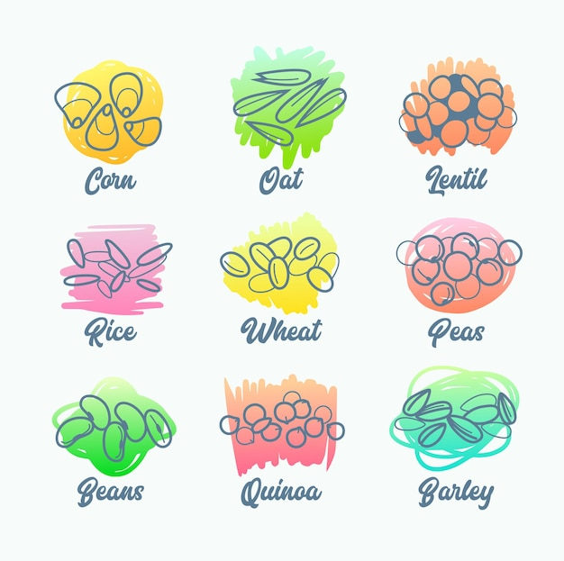 Set cereal types, isolated icons of corn, oat and lentil, rise wheat and peas, beans quinoa and barley.