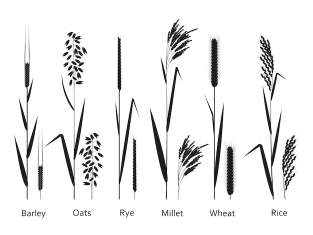 Set of cereals plants isolated on white