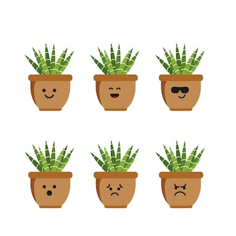 Set character zebra cactus illustration