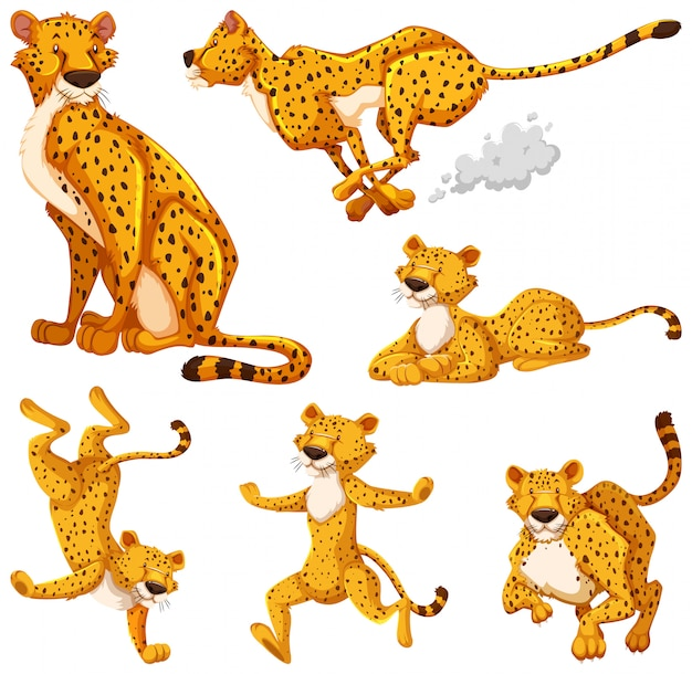 Set of cheetah cartoon character