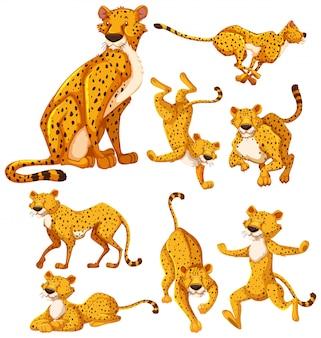 Set of cheetah cartoon character