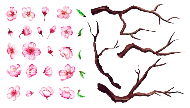 Set of cherry blossom flowers, leaves, branches. sakura floral illustration isolated on white.