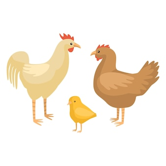 白い背景で隔離の鶏の家族を設定します。面白い漫画のキャラクターの農場のひよこ、鶏、オンドリの色。あらゆる目的のデザインのための平らな鳥。ベクトルイラスト。