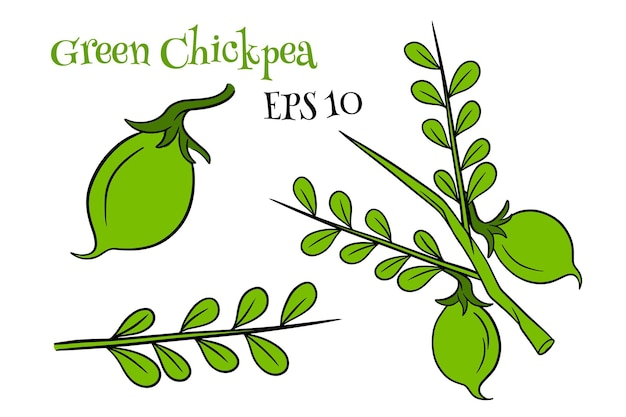 A set of chickpeas. fresh chickpeas on a twig with leaves. in a cartoon style. vector illustration for design and decoration.
