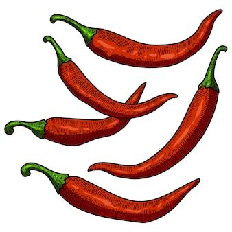 Set of chili pepper illustrations on white background