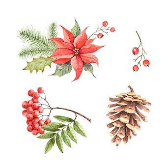 Set of christmas botanical illustrations for holiday design vector watercolor
