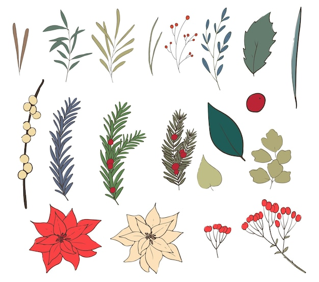 Set of christmas floral. line and color.  illustration.