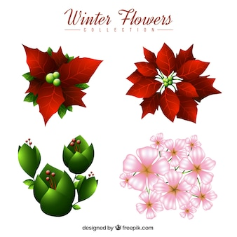 Set of christmas flowers and other winter plants