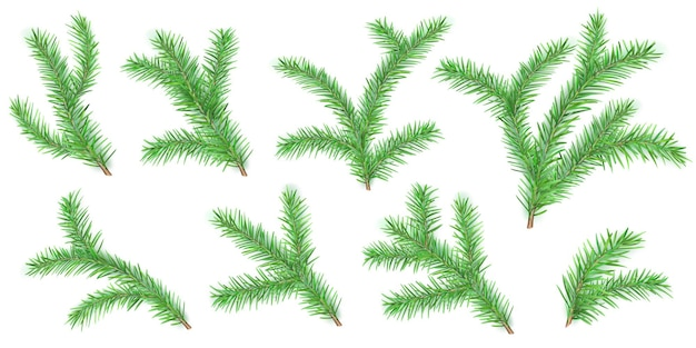 Set of christmas tree branches with shadows on whites