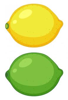 Set of citrus fruit