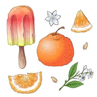 Set of citrus ice cream