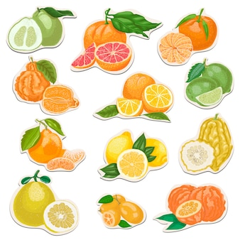 Set of citrus